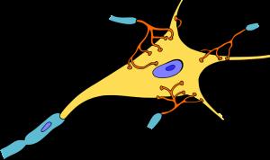 Nervenzellkörpper